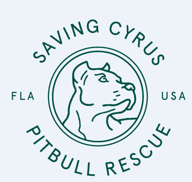 Saving Cyrus Pitbull Rescue