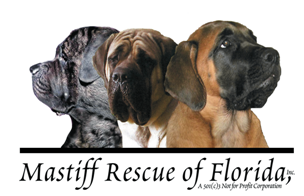 Mastiff Rescue of Florida