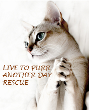Live to Purr Another Day