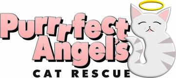 Purrrfect Angels Cat Rescue