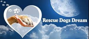 Rescue Dogs Dream