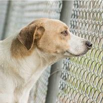 Foto de un perro mirando a través de la cerca